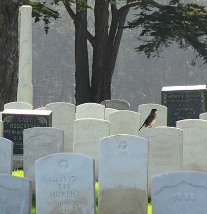 A Robin visits some of the 30,000 American war dead interned at the National Cemetery located on the grounds of the Presidio. Photo by Mark Vallen ©.